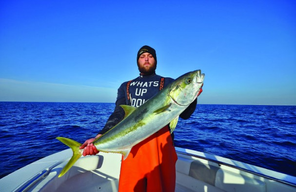 yellowtail 2