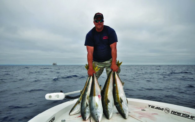 yellowtail 3