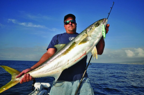 yellowtail 4