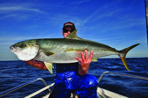 yellowtail 8