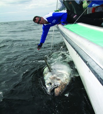 Lead Giant Bluefin