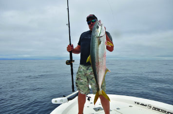 yellowtail 11